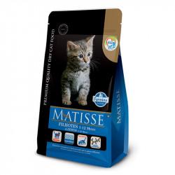 Matisse - Filhotes Kitten 2 Kg